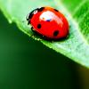 whymzycal: A ladybug on a leaf (ladybug)