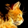 superbadgirl: (fractal cat)