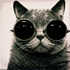 elmey: a cat with goggles (goggle kitty)