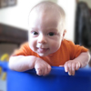metawidget: Oscar in a bucket, smiling (oscar in bucket)