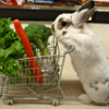 Foodwank Bunny