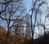 iewi: trees on sky (ghosty)