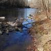 iewi: still river (fall)
