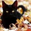 jenab: Made by <lj user=misbegotten> (cat - black cat in leaves)