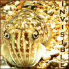 castalia: (cuttlefish - invisible)