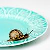 oaktree: (snail)