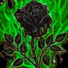arethinn: black rose and green flames (dark (black rose))