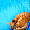 lavendertook: (orange cat sleeping on teal, cat orange sleeping)