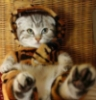 tigrarim: (меня колбасит)