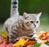 tigrarim: (пошуршим листьями?)