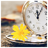 semielliptical: pocket watch and a yellow flower (time)