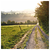 semielliptical: road beside a field (travel)