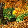 jenab: (fall - forest of colour)