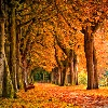 jenab: (fall - arching trees)