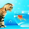 jena: (cat and goldfish)