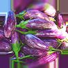 aubergines: (AUBERGINES.)
