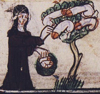 ossamenta: Medieval manuscript illustration: Nun picking phalluses that grows on a tree (Nun with phallus tree)