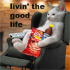 "jenna_thorn: cat in recliner with junk food, text is ""livin' the good life"" (Good life)"