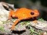 friendoffrogs13: (frog)