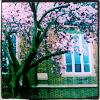 tortenet: (chapel tree)