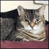 xtina: A picture of my cat Sophie, looking stern. (stern)
