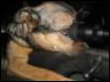 cuulguy: (Dog sniper)
