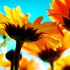 m_elizabeth_penn: (sunny)