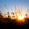 thady: (DIV  -  meadow)