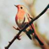 thady: (DIV  -  bird)