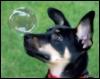 yutaku: (Doggy)
