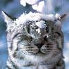 elenka_g: (Снежный кошк)