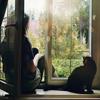 elenka_g: (Fenster)