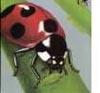 cynthia1960: (Ladybug; the totem)