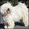gemilicious: (Hairity dog)
