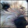 fun_demented: (dog)