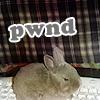cynthia1960: (computer pwnd!)