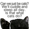 rise: can we just be cats? we'll cuddle and sleep all day. is that what cats do? (can we just be cats?)