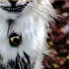 h_natasia: alice wonderland prompts (pic#8467354)
