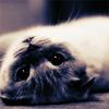 suchmelodrama: (kitteh)