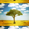 wands: (stock ˠ african tree)