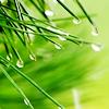 wands: (stock ˠ water drops on grass)