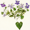 sofiaviolet: drawing of violets in multiple shades of purple (bunch of violets)