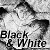 sottobosco: (foglia bianco e nero)