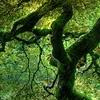 safekeeper: A tree branch wiggles upward through a canopy of bright green. (mosspunk)