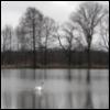 november_rain: (November Rain)
