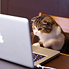 recessional: a cat looking at a macbook (personal; o hai internets)