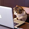 recessional: a cat looking at a macbook (personal; o hai internets)