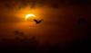 eclipse3: (Default)