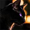 absentconstellation: (serious cat business)