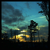 nkyinkyin: photo of the pine barrens during sunset in berkley twp, nj. (the pine barrens at dusk)